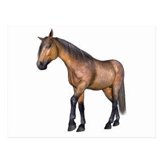 Bay Horse Walking Postcard