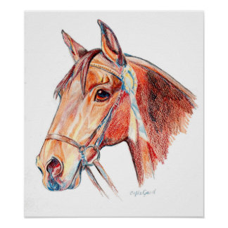 Bay Horse with Rosette Portrait Drawing Poster