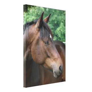 Bay Horse with Star, Looking to Side Canvas Print