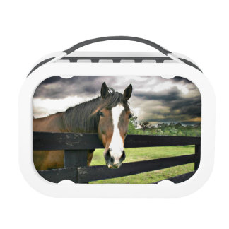 Bay horse with white blaze lunch box