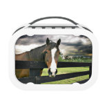 Bay horse with white blaze replacement plate