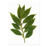 Bay leaf postcard