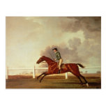 Bay Malton with John Singleton Up, c.1767 Postcard