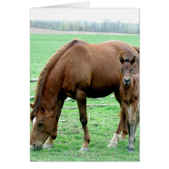 Bay Mare and Her Colt Card