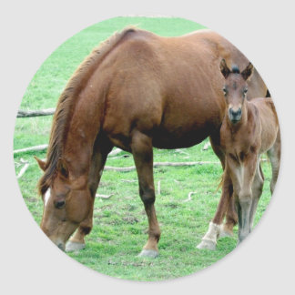 Bay Mare and Her Colt Classic Round Sticker