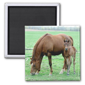 Bay Mare and Her Colt Magnets