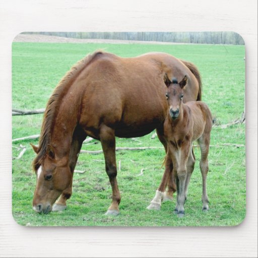 Bay Mare and Her Colt Mouse Pad