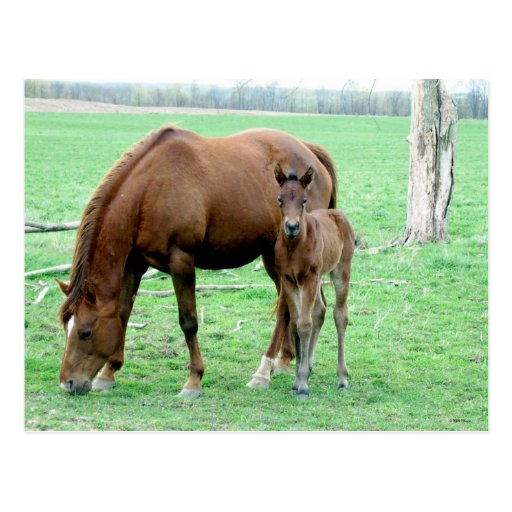 Bay Mare and Her Colt Postcard