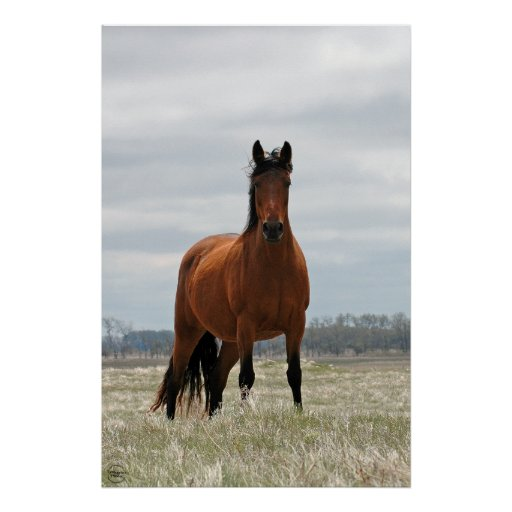 Bay Mare - Tall Poster