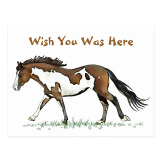 Bay Paint Horse Cantering Postcards