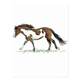 Bay Paint Horse Cantering Postcard