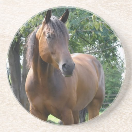 Bay Thoroughbred Horse Coasters