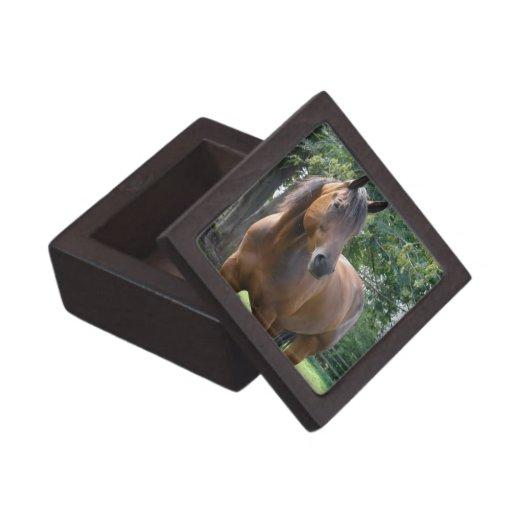 Bay Thoroughbred Horse Gift Box Premium Jewelry Box