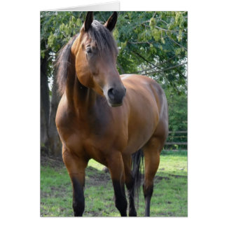 Bay Thoroughbred Horse Greeting Card