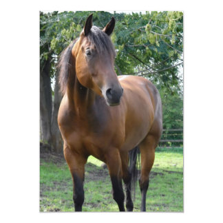 Bay Thoroughbred Horse Invitation