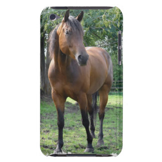 Bay Thoroughbred Horse iTouch Case Barely There iPod Covers