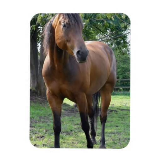 Bay Thoroughbred Horse Magnet Flexible Magnets