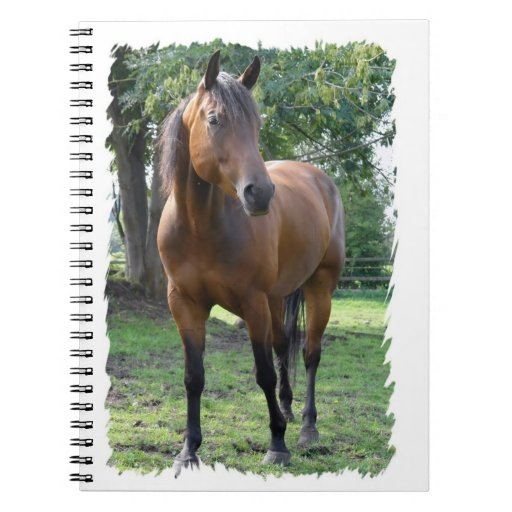 Bay Thoroughbred Horse Notebook