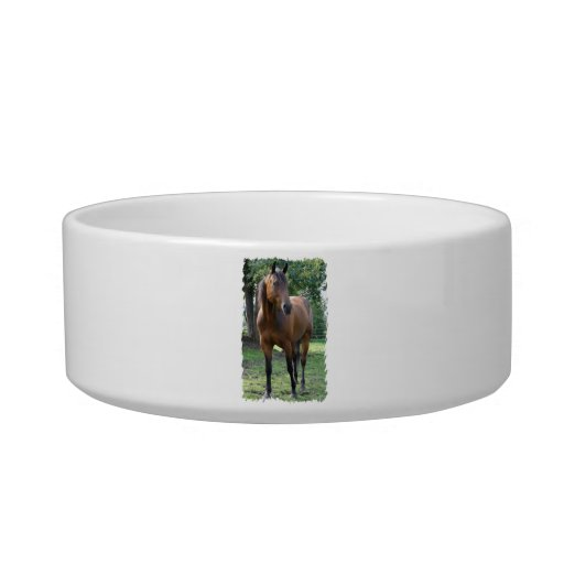 Bay Thoroughbred Horse  Pet Bowl Cat Bowls
