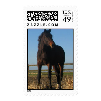 Bay Thoroughbred Horse Postage Stamp