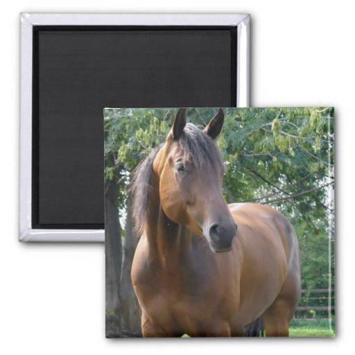 Bay Thoroughbred Horse Square Magnet Fridge Magnets