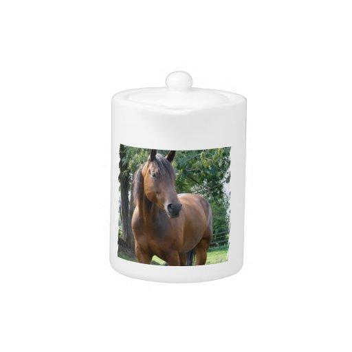 Bay Thoroughbred Horse  Teapot