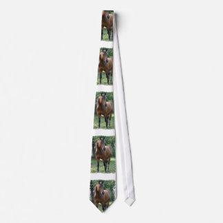 Bay Thoroughbred Horse Tie