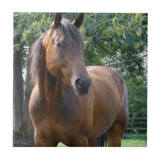 Bay Thoroughbred Horse Tile