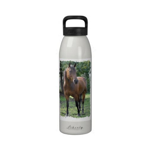 Bay Thoroughbred Horse  Water Bottle