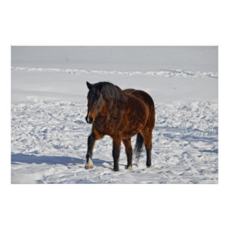 """Bay Winter Horse """"Year of the Horse"""" Equine photo2 Poster"""