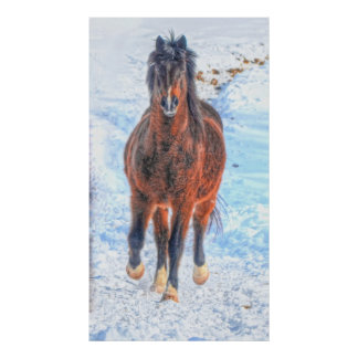 """Bay Winter Horse """"Year of the Horse"""" Equine photo Poster"""