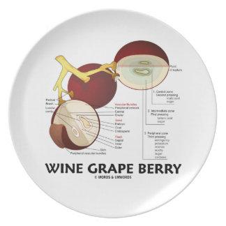 Baya de la uva de vino (anatomía botánica) platos de comidas