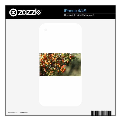 Bayas del otoño skins para iPhone 4S