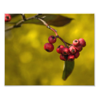 Bayas del rojo del navidad fotografías