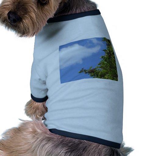 Bayas más viejas ropa de perros