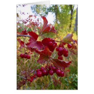 Bayas rojas salvajes tarjeta de felicitación