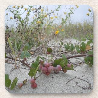 Bayas salvajes en la playa posavasos