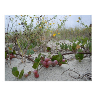 Bayas salvajes en la playa tarjeta postal