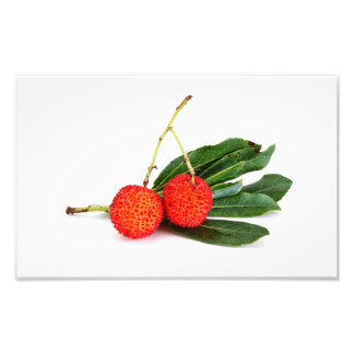 bayberry rojo impresion fotografica