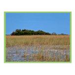 Bayhead in Sawgrass Postcard