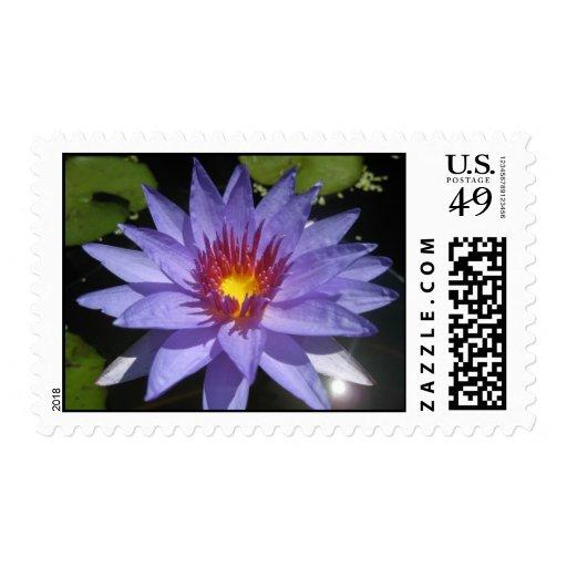 Bayou Blue Stamp