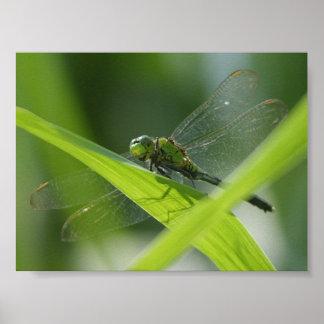 Bayou Bug Poster