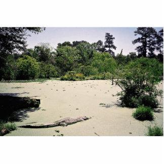 Bayou (swamp), Louisiana, USA Statuette