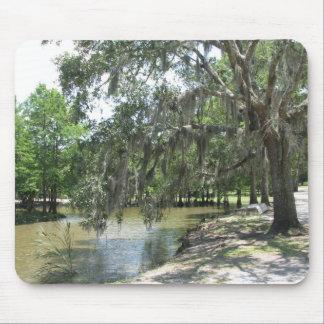 Bayou Tree, Avery Island, Louisiana Mouse Pad