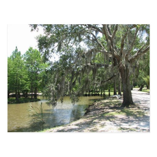 Bayou Tree, Avery Island, Louisiana Postcards