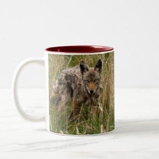 BC Coyote Wildlife Nature Tea or Coffee Mug zazzle_mug