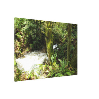 BC Rainforest Stream Wilderness Nature Photo Canvas Print