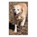 BC Yellow Labrador Retriever Loves the Hunt Business Cards