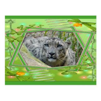 bcr-snow-leopard-st-patricks-0056 post card