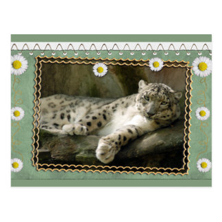 bcr-snow-leopard-st-patricks-0076 postal